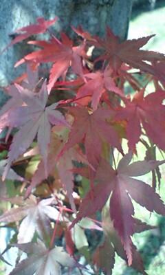 紅葉と杉並木